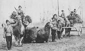Козаки - все про них!-orenburg_cossacks_with_camels.jpg
