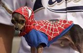 ����� �� �������� �����?-1spidermandog.jpg